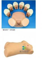 """""""康为医疗""""妇科生殖模型,妇科人体模型,女性卵巢模型"""