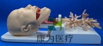 如何选择喉镜、支气管硬镜/软镜测试模具,模拟器,消化内镜模型