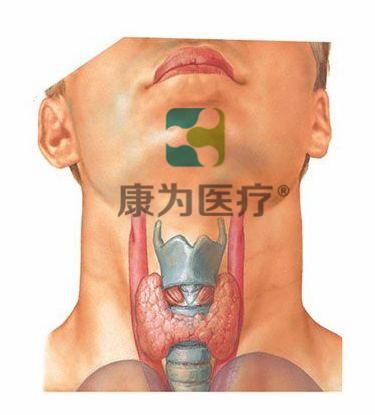 """""""康为医疗""""甲状腺查体检查诊断模型"""