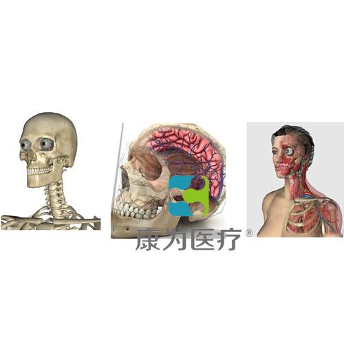 """""""康为医疗""""3D三维人体解剖系统"""