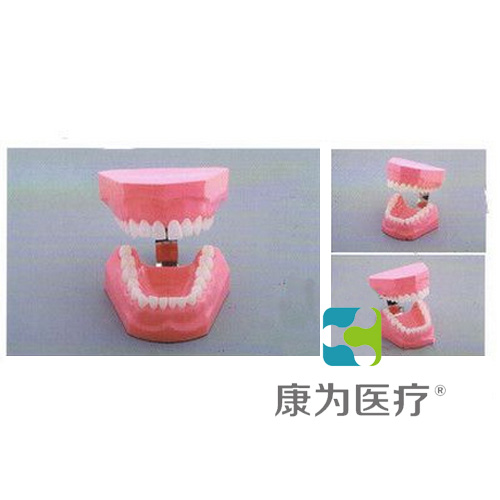 """""""康为医疗""""成人刷牙模型"""