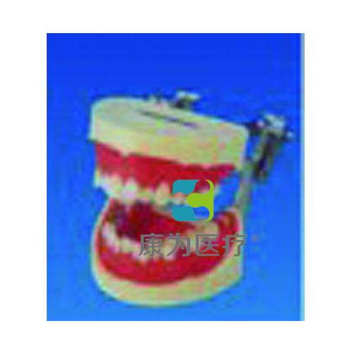 """""""康为医疗""""刷牙指导牙列模型"""