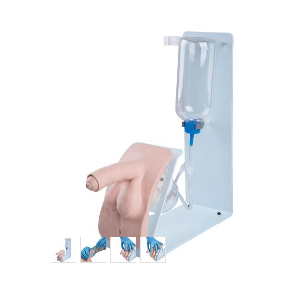 德国3B Scientific®基础版导尿训练模型,男性