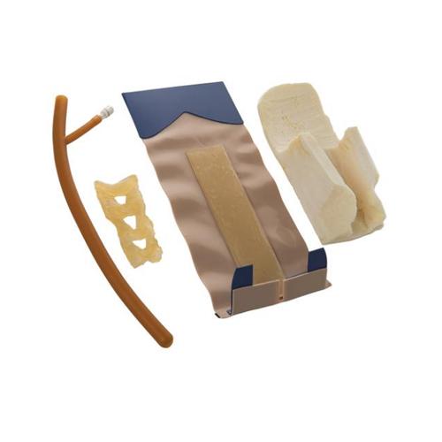 德国3B Scientific®皮肤、肌肉和脊髓