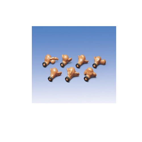 德国3B Scientific®7个子宫- 正常的和带有外部病理的