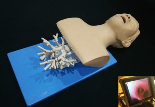 呼吸介入-纤支镜介入模拟器,高仿真模拟支气管镜模型