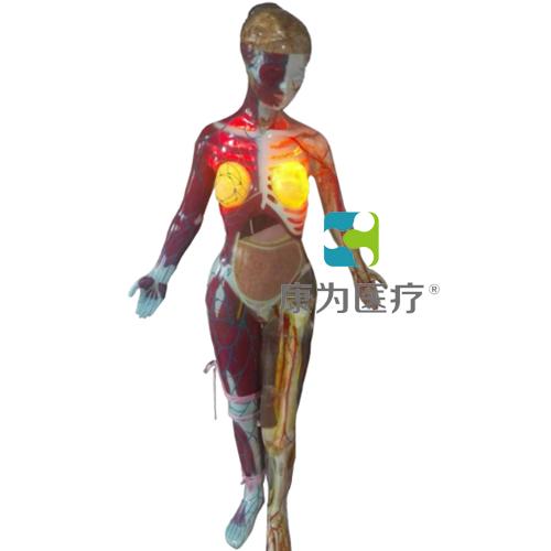 电动医学教学模型