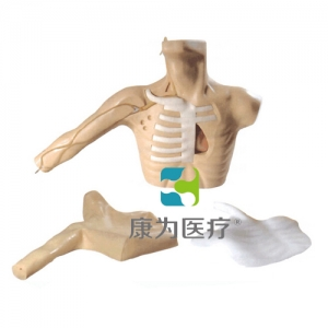 """""""康为医疗""""新型外周穿刺中心静脉插管(PICC)模型"""
