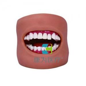 """""""康为医疗""""口腔护理保健模型(带脸颊)"""