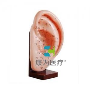 """""""康为医疗""""耳针灸模型22CM"""