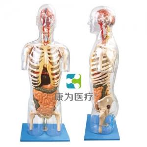 """""""康为医疗""""透明半身躯干附内脏模型"""