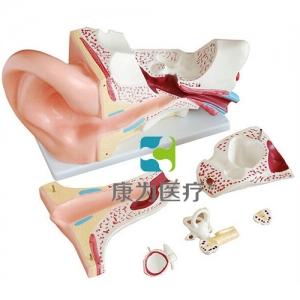 """""""康为医疗""""大耳解剖模型"""
