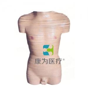 """""""康为医疗""""男性躯干横断断层解剖模型"""